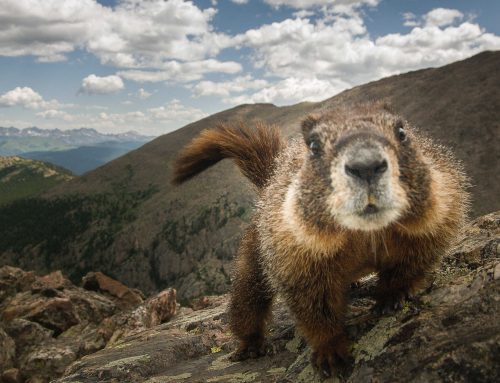 Vivi il giorno della Marmotta?